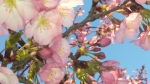 2014 blossoms pink